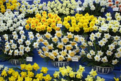 2014 San Francisco Flower & Garden Show to be held mid-March