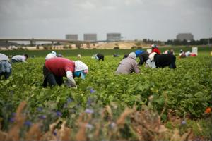 A new California bill would let agricultural laborers already in the country obtain work permits.
