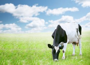 Ben & Jerry's working on building non-GMO supply chains