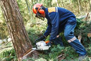 Businesses pledge to stop deforestation in supply chain