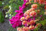 Cape Cod's Heritage Museums & Gardens provide opportunities to learn about, enjoy native flowers