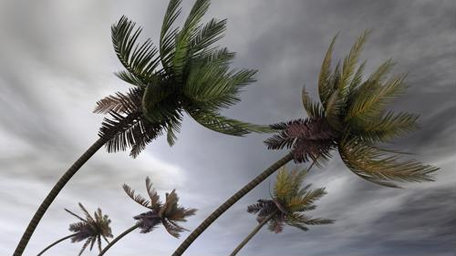5 tips for businesses to stay connected during the hurricane season