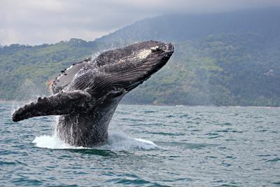 Exclusive high-end whale watching tours offered in Ventura