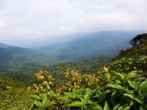 Explore Unique Destinations on Costa Rica Tours