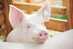 Promoting animal rights in the supply chain
