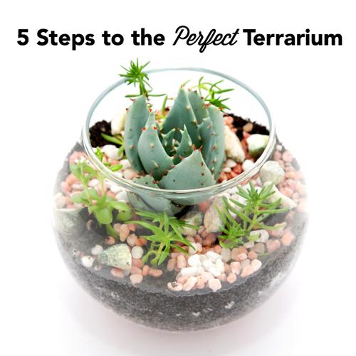 how to create humidity in a plant terrerium