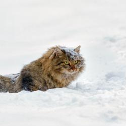 How to protect your outdoor cat from fleas this winter