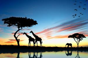 Getting a taste of South Africa's top attractions