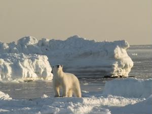 Logistical routes could change as North Pole ice melts
