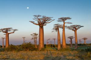Mull around with the animals in Madagascar