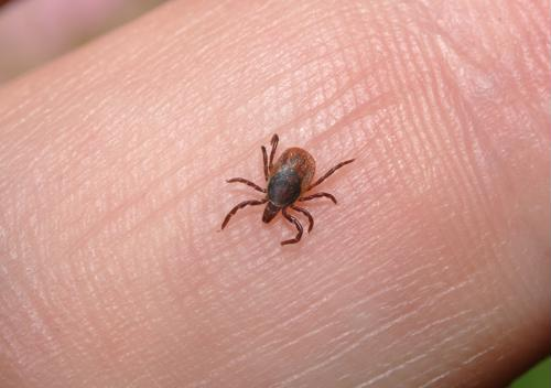 Seniors face greater risks from the diseases spread through tick bites.