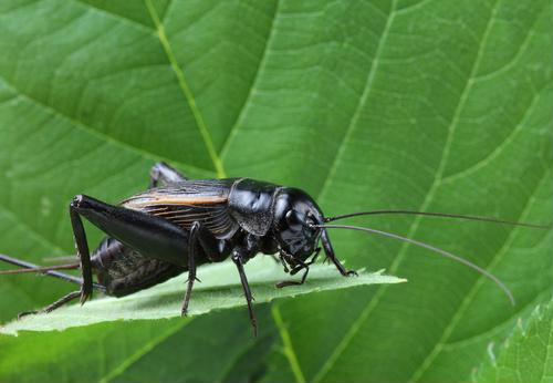 Study: Insects' limbs can move without muscles