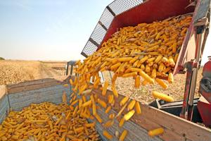 Corn supply expected to surge