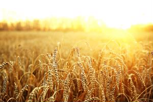 Gluten-free gastronomy: Celiac disease and the growing product market