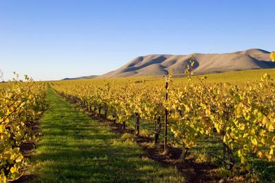 Two reasons why Santa Ynez is becoming California's locavore hotspot