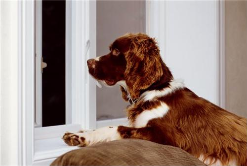 Anti-flea home cleaning tips that will prevent a flea infestation