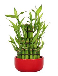 Go green with bamboo