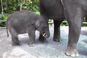 Berlin Zoo welcomes baby elephant Anchali to the family