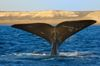 Experience a Cape Cod whale watch