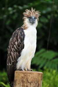 Farmer who killed rare Philippine eagle given small fine
