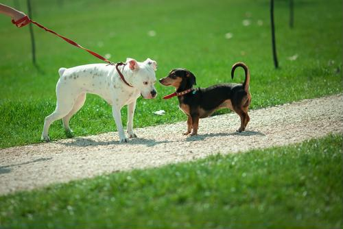 Flea and tick tips that will come in handy at the dog park