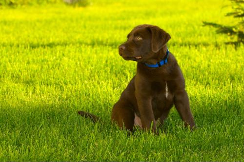Flea and tick tips to keep your yard in good order this fall