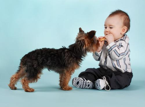Having a Pet Can Protect Infants Against Respiratory Illnesses