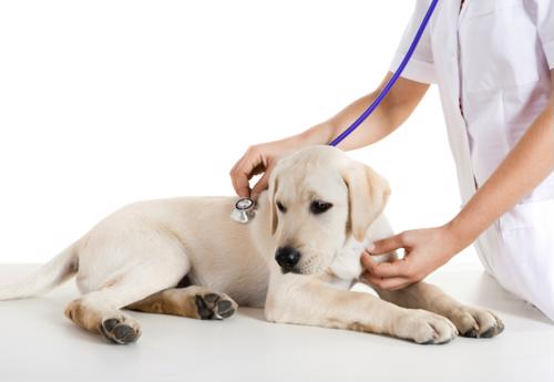 Make an early summer veterinary appointment to go over your flea and tick options