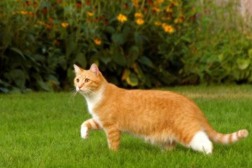 Should your cat be kept indoors or outside?