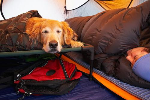 Safeguarding your pooch from the risk of mosquitoes during your camping trip