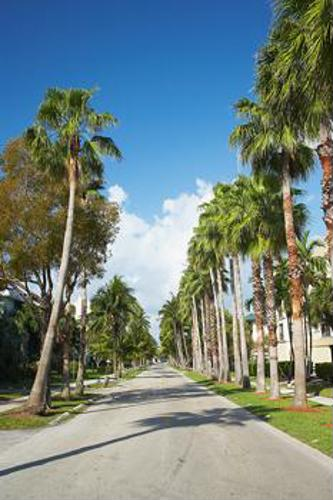 When getting rid of palm tree pests, beware of fronds
