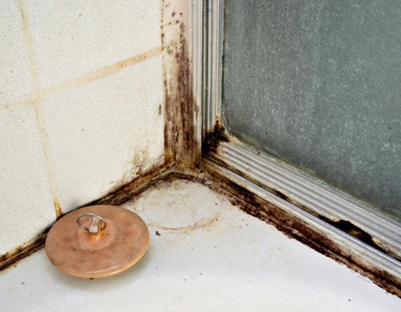 What to do when you find black mold in your bathroom?
