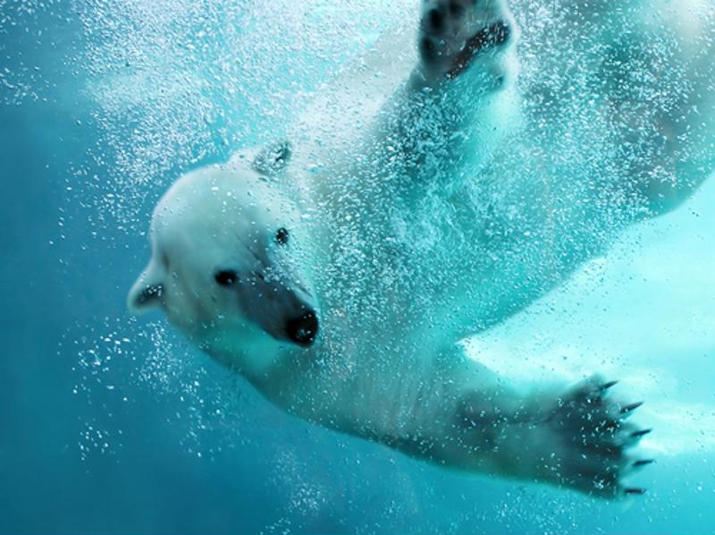 Oceanic and Arctic life will be severely impacted by climate change if international actions are not taken, and soon.