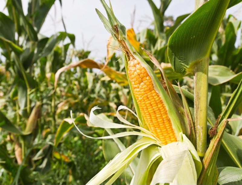 Farms have to make the necessary preparations to account for interest rate hikes.