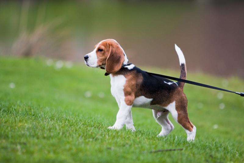 Leash laws and other rules may be important to note before changing neighborhoods.