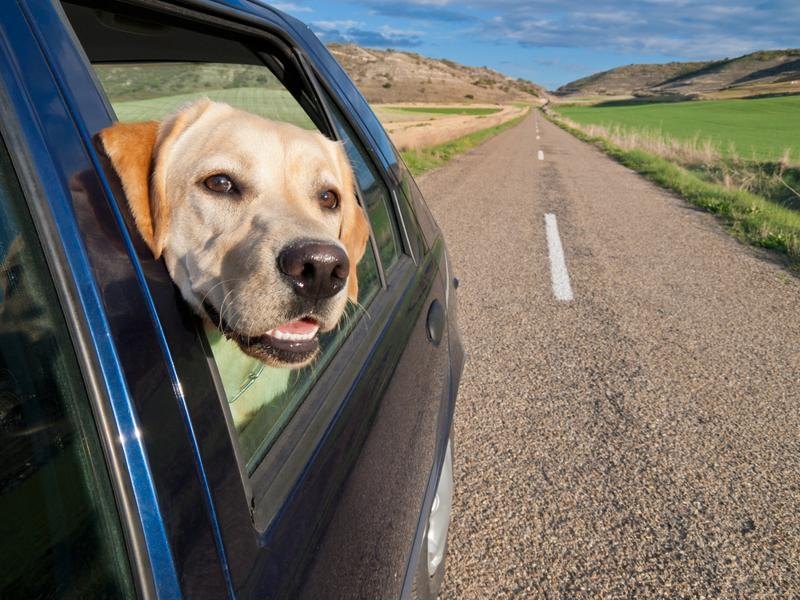 Keep an eye out for alternative lodging options that may work better for your dog.