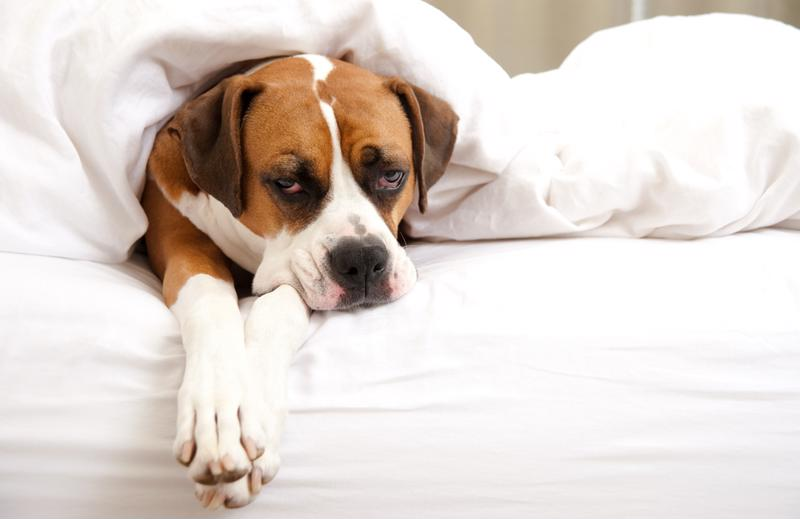 Allowing your pooch to share your space may lead to poor sleep.