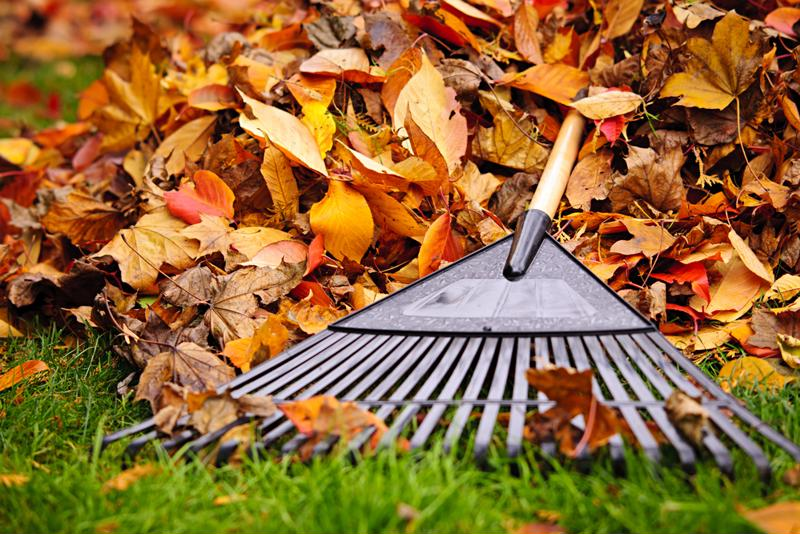 Good old-fashioned rakes are still a No. 1 tool for leaf removal.