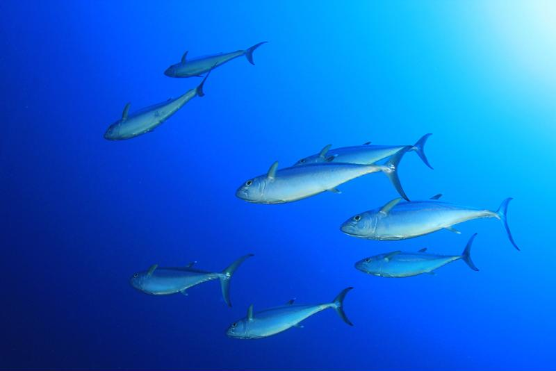 The health of the oceans directly correlates with the health of the planet.