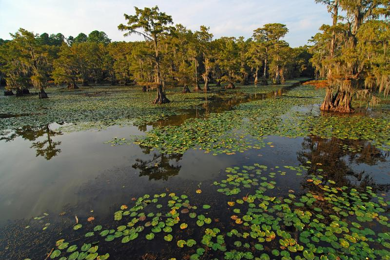Wetlands have a unique role to play in Earth's carbon cycle.
