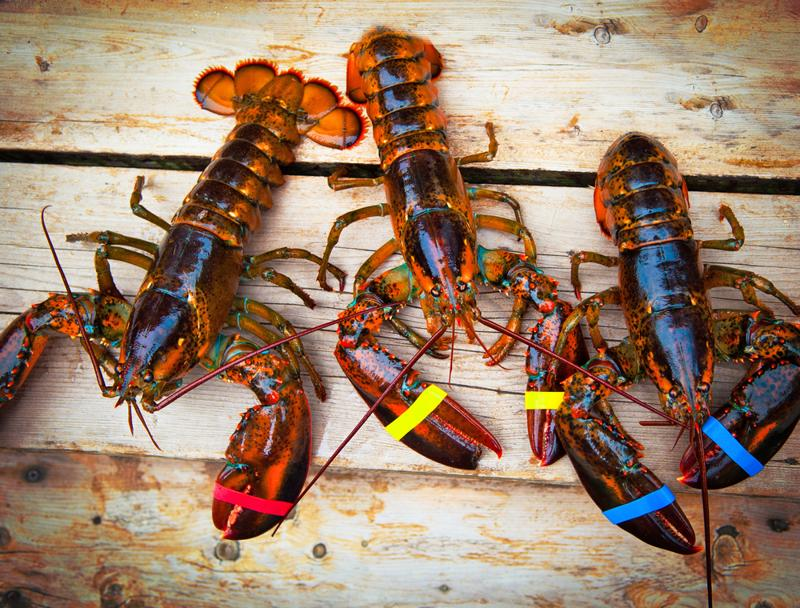 Maine is a Mecca for lobster lovers everywhere.