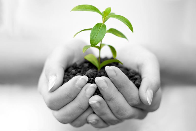 Time to plant the seed for energy efficiency in your small business.