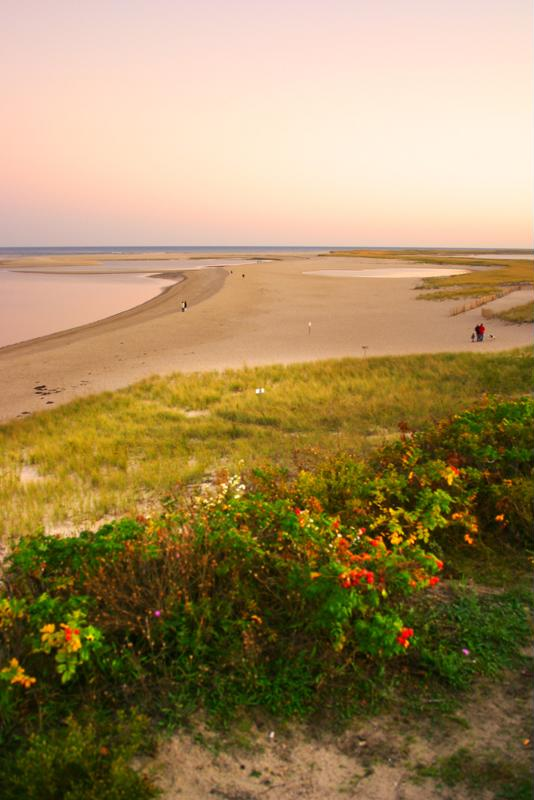 Algae blooms in Cape Cod have resulted in a decrease in tourism.