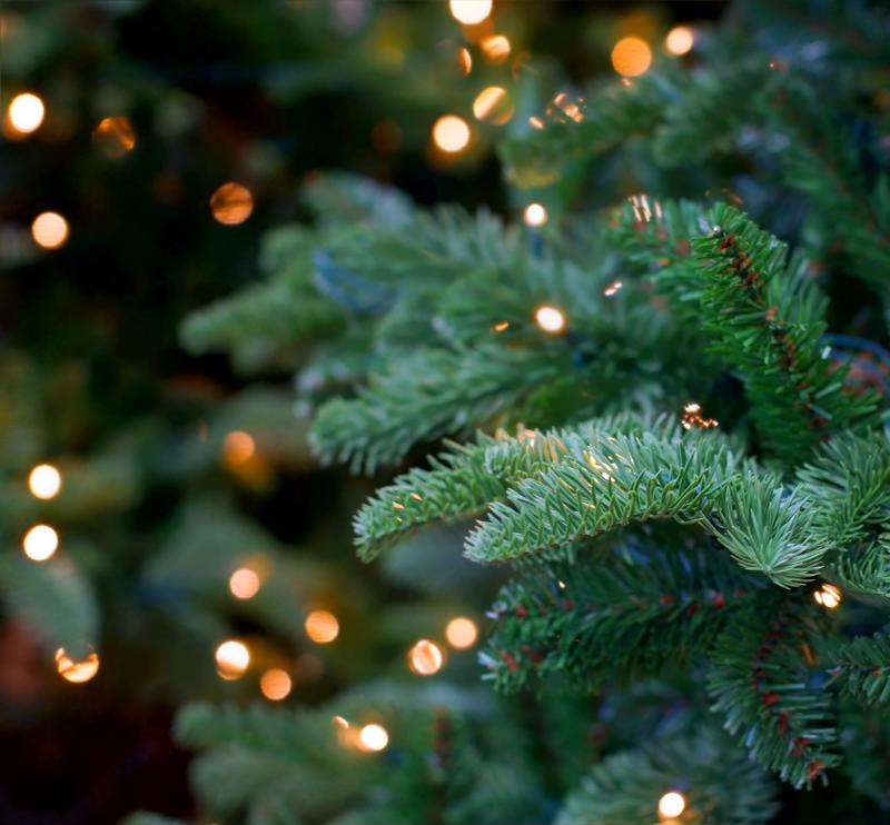 Christmas trees are the staple decoration during the holiday season.