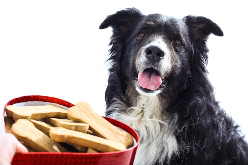 Your favorite four-legged friend won't be able to resist your homemade dog treats.