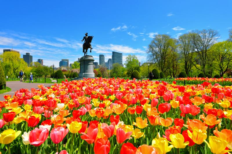 Be sure to visit the Public Garden if the weather cooperates while you're in Boston.