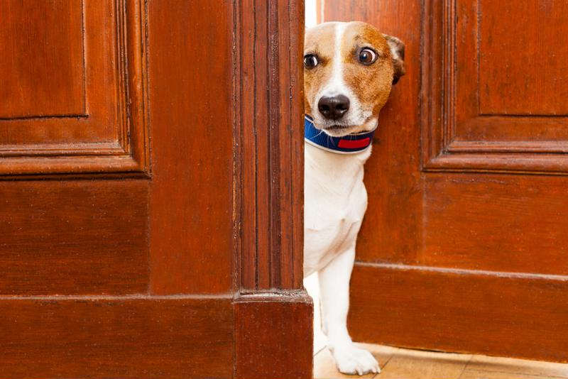 Keeping your dog a secret from your insurance provider could cost you in the end.