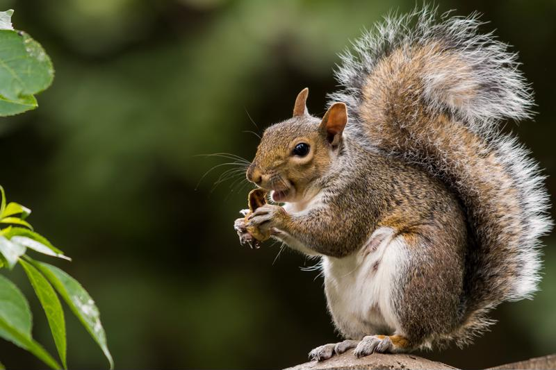Even something as innocuous as a squirrel can cause outages.