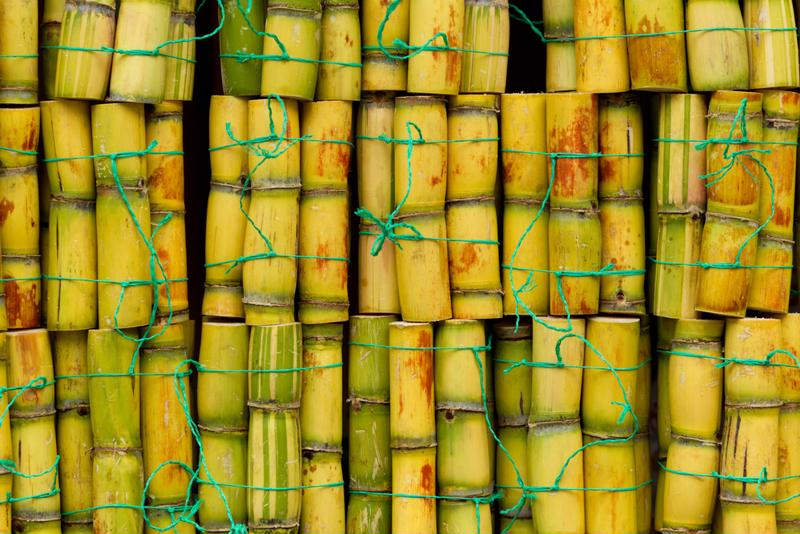 Like tequila, rum is also made from a tropical plant: sugar cane.