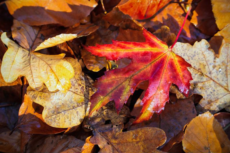 Damp, heavy piles of leaves promote mold growth.